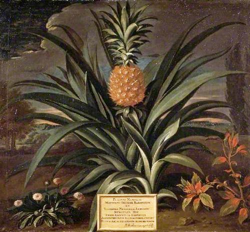 Celebrity-Pineapple